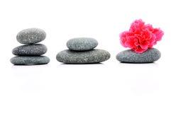 Frangipani en Zen Stone Stock Foto