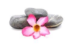 Frangipani et Zen Stone Image libre de droits