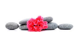 Frangipani et Zen Stone Photographie stock
