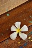 Frangipani, flor tropical Fotografía de archivo