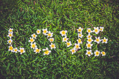 Frangipani flower arrangement as the word love on the green grass Royalty Free Stock Images