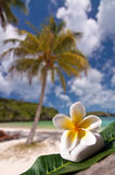 Frangipani flower, beach and palm tree Royalty Free Stock Image