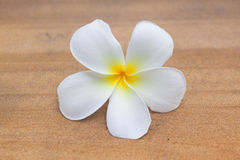 Frangipani flower Stock Photos
