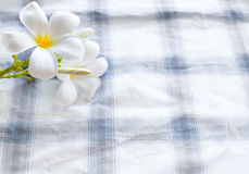 Frangipani flower on clothes background and space stock image