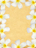 Frangipani flower frame on old paper Royalty Free Stock Images