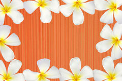 Frangipani flower frame on red wood texture Stock Images