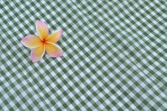 Frangipani flower on a green checkered cloth Stock Image