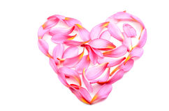 Frangipani flower in heart shape Stock Photos