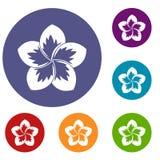 Frangipani flower icons set Stock Images