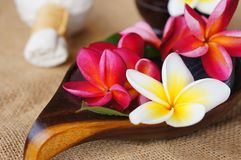 Frangipani flower on jute fabric. Wellness spa & aromatherapy concept with frangipani flower on jute fabric Stock Photo