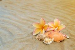 Frangipani flower and seashell on sand Royalty Free Stock Photos