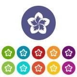 Frangipani flower set icons Royalty Free Stock Photography