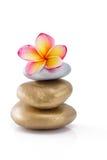 Frangipani flower on stones, on white Stock Images