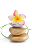 Frangipani flower on stones, on white Royalty Free Stock Image