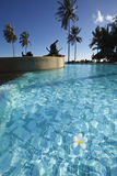 Frangipani flower in a swimming pool . Royalty Free Stock Photography