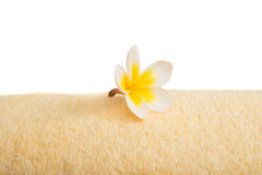 Frangipani flower on a towel Stock Photo