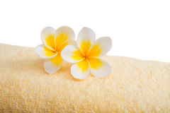 Frangipani flower on a towel Royalty Free Stock Photos