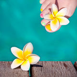 Frangipani flower, turquoise water Royalty Free Stock Photos