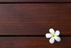 Frangipani flower on wood texture background Royalty Free Stock Images