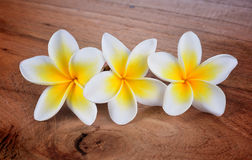 Frangipani flower on a wooden Royalty Free Stock Photos