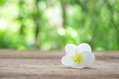 Frangipani flower on wooden table Royalty Free Stock Photography