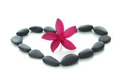 Frangipani flower with zen rocks with white background. Royalty Free Stock Image