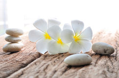 Frangipani flower with zen stone Royalty Free Stock Image