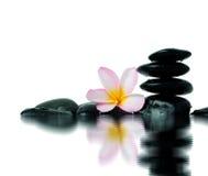 Frangipani flower and zen stones Royalty Free Stock Photos