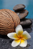 Frangipani flower and Zen style stone Royalty Free Stock Photos