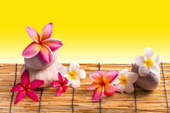 Frangipani flowers Royalty Free Stock Image
