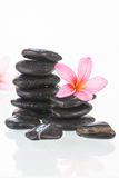 Frangipani flowers and black stones Stock Images