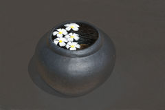 Frangipani flowers in black urn Stock Photography
