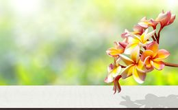 Frangipani flowers. Bokeh light nature background. Frangipani flowers bokeh light nature background monday green floor wood wooden texture textured white spa stock images