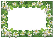 Frangipani Flowers Border Stock Photos