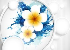 Frangipani Flowers Composition. Royalty Free Stock Photos