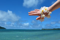 Frangipani flowers decorate woman hand in tropical resort Royalty Free Stock Photo