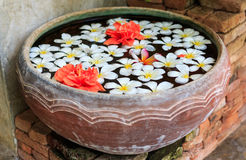 Frangipani flowers floating in the ancient bowl Royalty Free Stock Photography