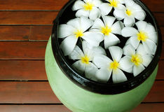 Frangipani flowers floating in the bowl Stock Photos