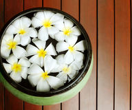 Frangipani flowers floating in the bowl Royalty Free Stock Photography