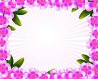 Frangipani flowers frame. Illustrated floral frame with frangipani flowers and beams Stock Photography