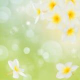 Frangipani flowers frame Stock Images