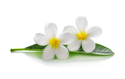 Frangipani flowers with leaves Royalty Free Stock Photography