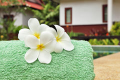 Frangipani flowers at poolside Stock Image