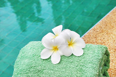 Frangipani flowers at poolside Royalty Free Stock Photos