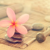 Frangipani flowers in retro style Royalty Free Stock Photo