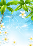 Tropical background with flowers in water Stock Photos