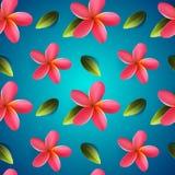 Frangipani flowers seamless pattern, Songkran Festival. In Thailand, Thai New Year, vector illustration Stock Images