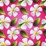 Frangipani flowers seamless pattern Stock Image