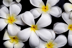 Frangipani flowers, Spa massage Stock Image