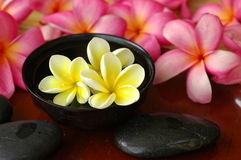 Frangipani flowers and spa stones Royalty Free Stock Image